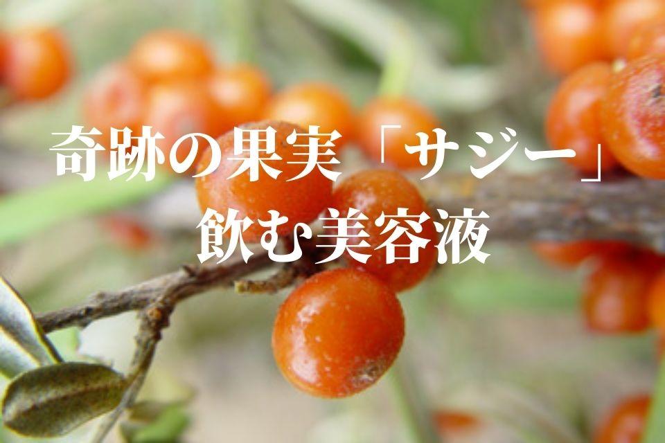 奇跡の果実 サジージュース 栄養 おすすめ
